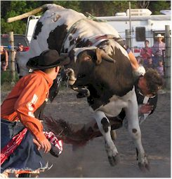 Bull Riding - Carrington Rodeo